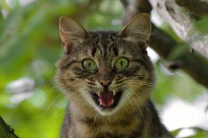 ムカついて苦情を言う猫